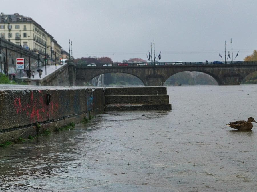 Il fiume Po in zona Murazzi a Torino. Il Po si è gonfiato di circa un metro nelle ultime 24 ore per effetto delle condizioni climatiche straordinarie. (ANSA/TINO ROMANO)
