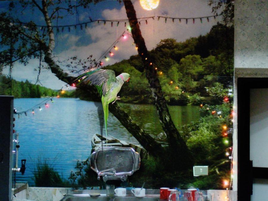ROSA SANTOS - Maha Maamoun - Untitled (Parrot) - 2015 - Stampa a getto d'inchiostro su dibond - 59 x 80 cm - Ed. 1/6 + 2 AP - Courtesy dell'artista e Rosa Santos, Valencia