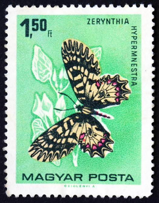 Ungheria 1966 (circa) (Adobestock)