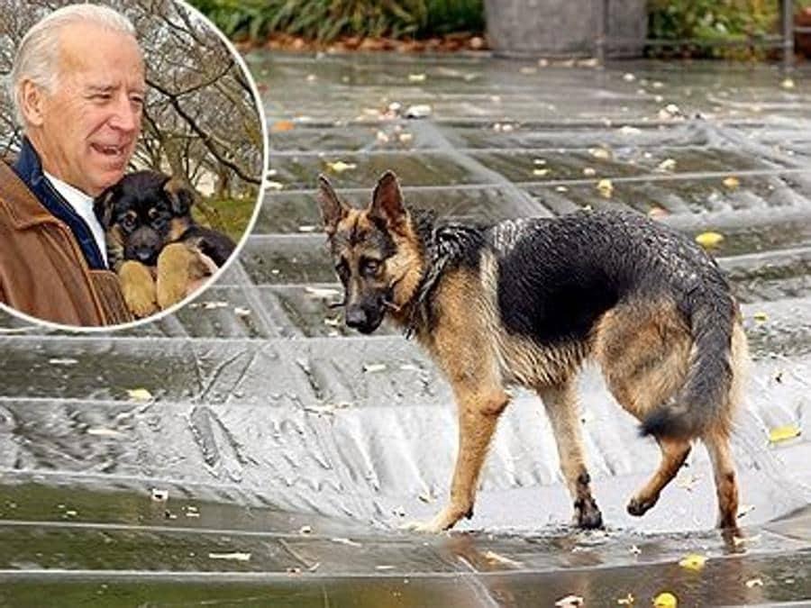 Champ con Joe Biden