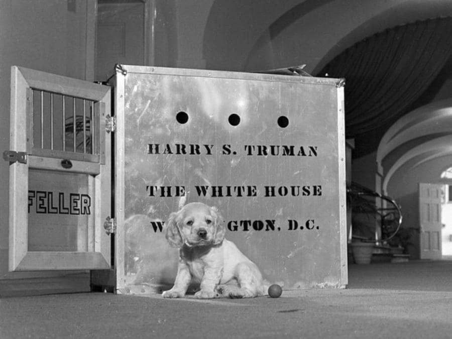 Il cane Feller del presidente Harry Truman