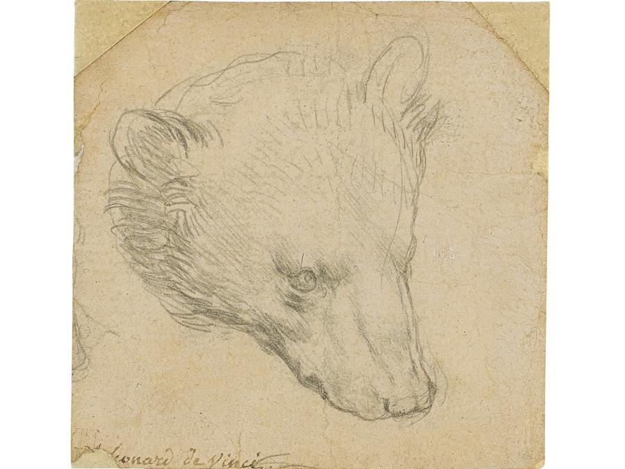 Leonardo da Vinci, Testa di orso - Acquistato per 7,5 milioni di £ (stima tra 8 e  12 milioni di  £)
