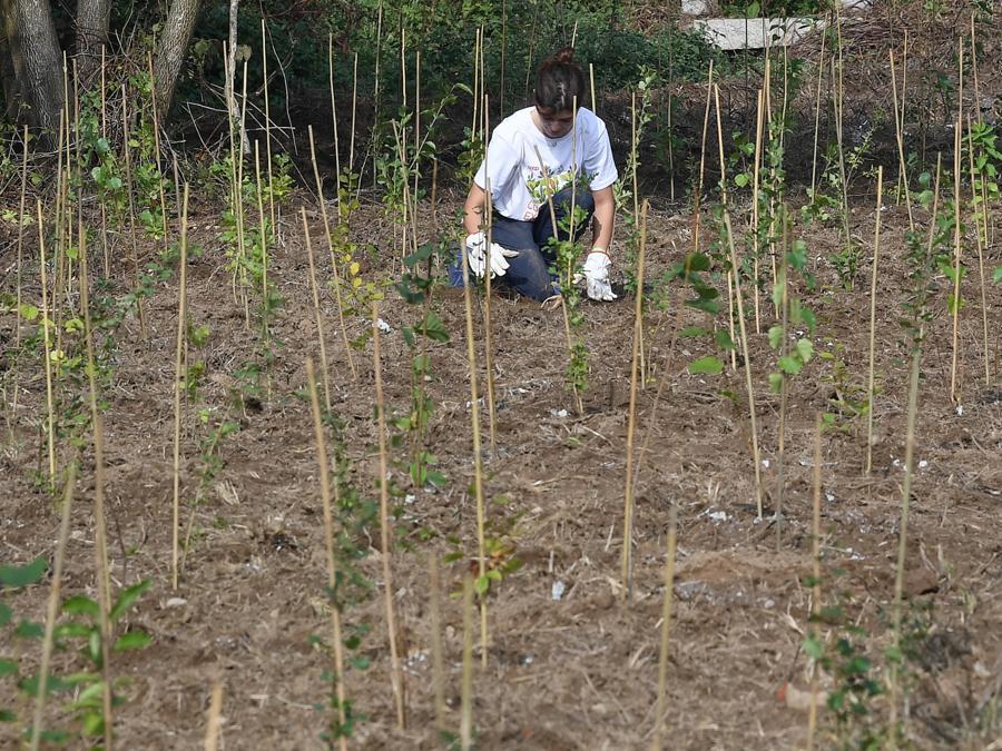 """Una ragazza pianta piantine d'alberi nell'area della Casa Chiaravalle nel giorno di apertura di """"Youth4ClimateCoop Youth Experience. (ANSA/DANIEL DAL ZENNARO)"""
