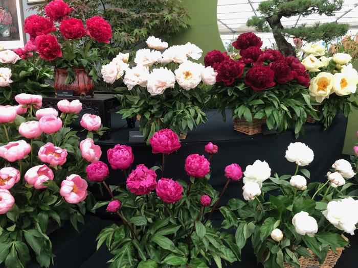 Chelsea Flower, i giardini che incantano Londra