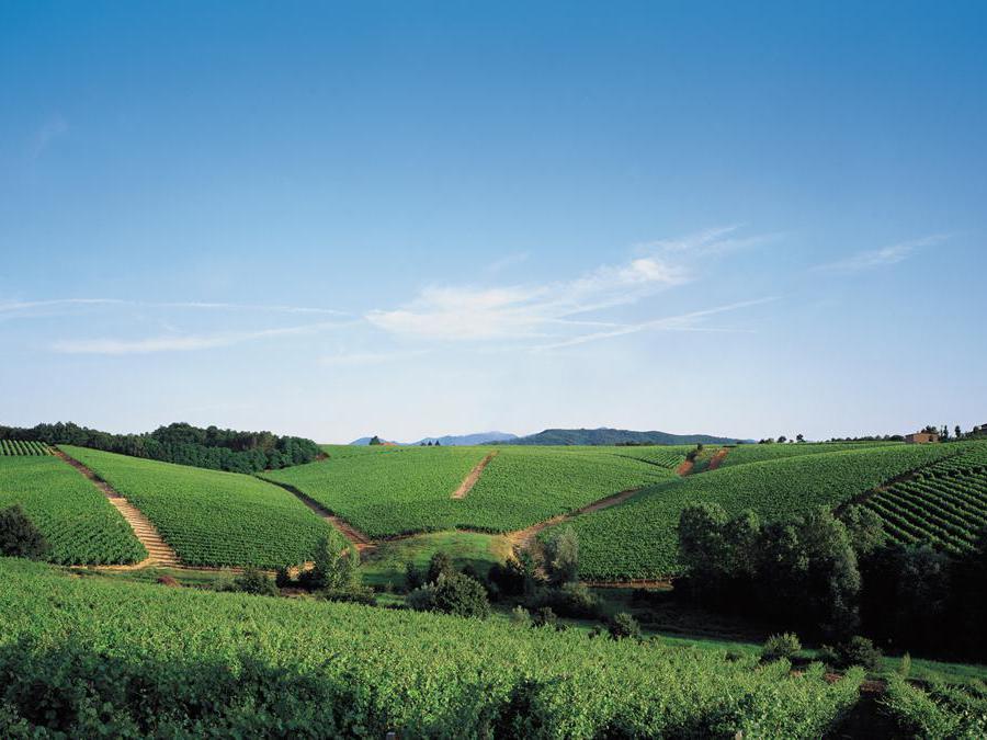 Tenuta La Marchesa Piedmont