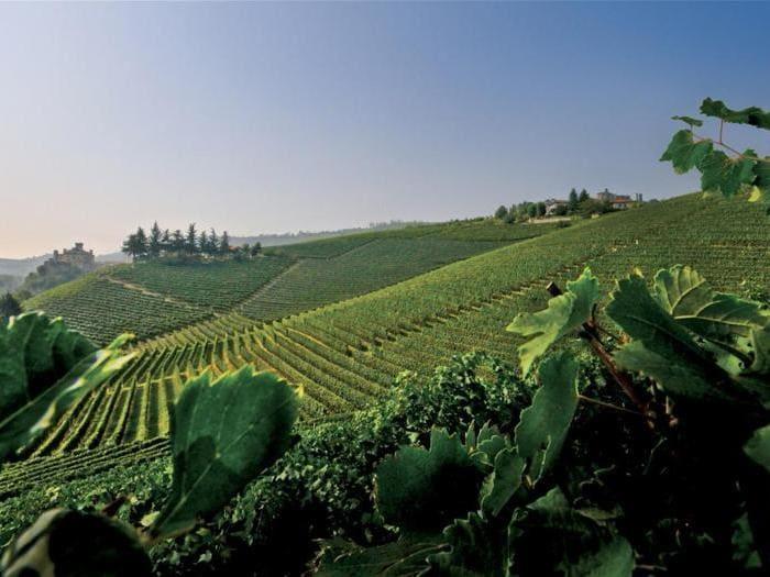 Il vino di Paolo Damilano