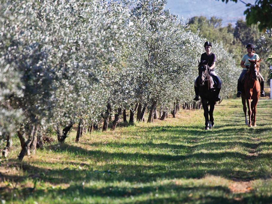 Calvacata fra gli ulivi al Borro, resort della famiglia Ferragamo in provincia di Arezzo