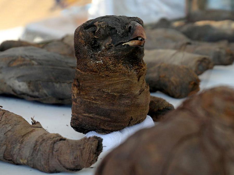 La testa mummificata di un falco in mostra al sito di sepoltura appena scoperto, la tomba di Tutu, ad al-Dayabat, Sohag, in Egitto. (Reuters/Mohamed Abd El Ghany)
