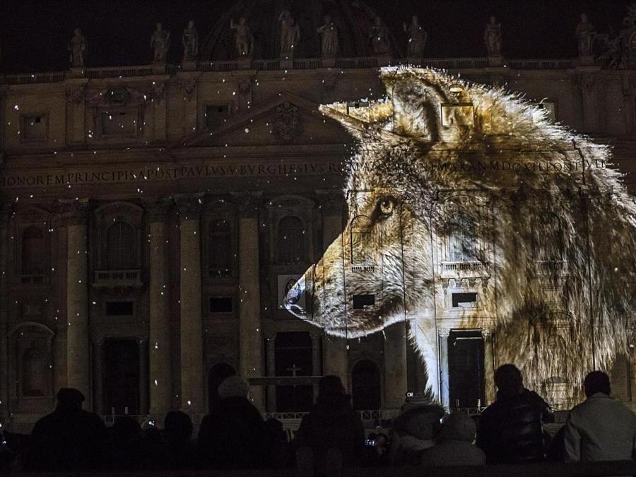 """Il lupo, uno degli scatti per """"Fiat Lux"""", lo spettacolo di foto di animali proiettate sulla facciata di San Pietro a Roma per l'apertura del Giubileo della misericordia, l'8.12.2015. Al progetto ha partecipato anche Joel Sartore con alcuni suoi scatti (Ansa)"""