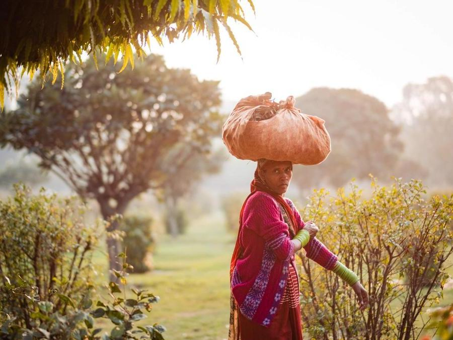 India,  campagne Ranakpur