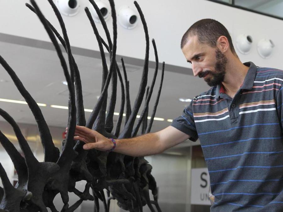 """Il paleontologo Pablo Gallina posa accanto ai modelli del """"Bajadasaurus pronuspinax"""", un nuovo tipo di dinosauro scoperto in Patagonia, presso il Centro Culturale della Scienza, a Buenos Aires, in Argentina. (Epa)"""