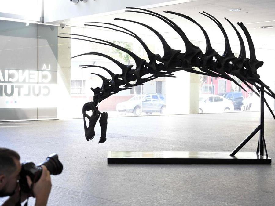 """Un fotografo scatta una foto a una replica di un """"Bajadasaurus pronuspinax"""", un nuovo dinosauro dalla lunga coda scoperto in Patagonia, durante la sua presentazione a Buenos Aires. (Photo by Juan MABROMATA / AFP)"""
