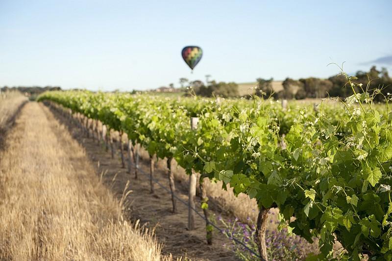 Una mongolfiera sui vitigni (Credit: South Australian Tourism Commission /ph Cameron Bloom)