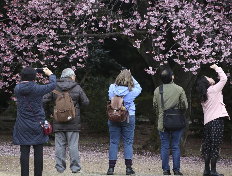 Shinjuku Gyoen National Garden a Tokyo (AP Photo/Koji Sasahara)