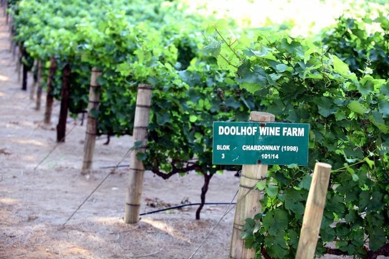 Doolhof Wine Estate, Wellington