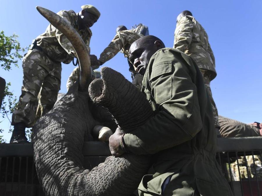 AFP PHOTO / SIMON MAINA
