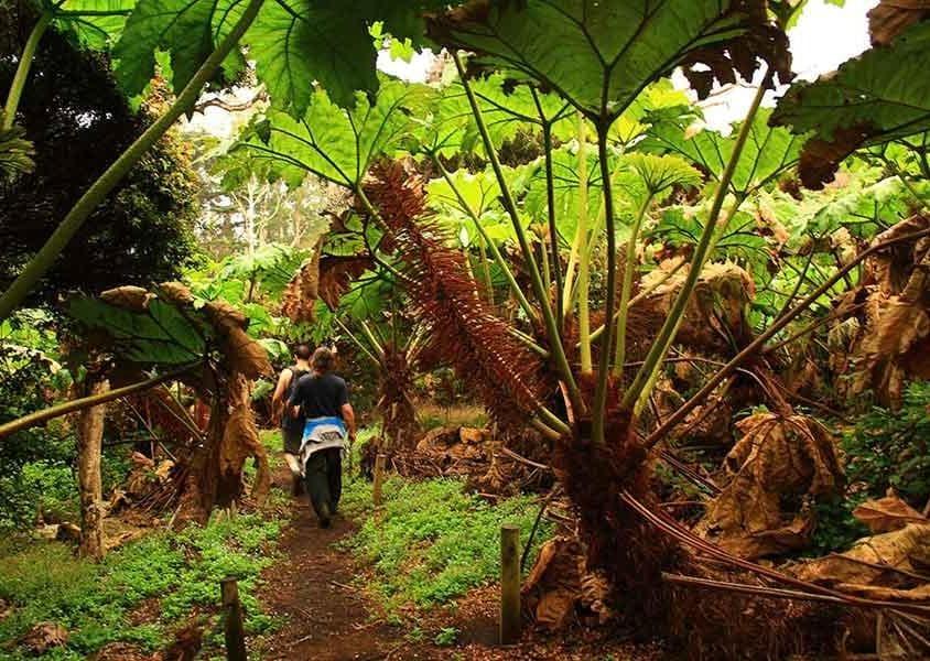 L'interno selvaggio dell'Isla Robinson Crusoe dove visse il naufrago Alexander Selkirk (PH Chile Travel)