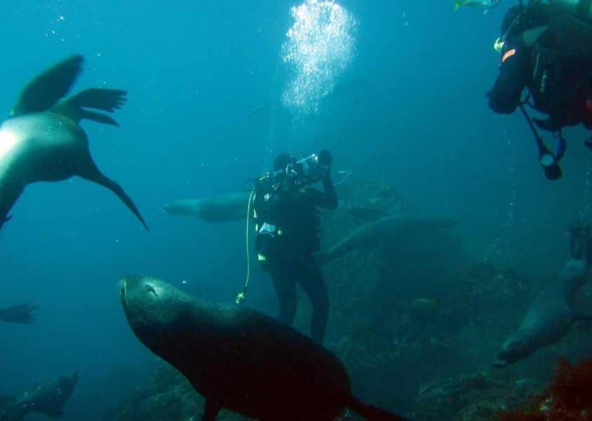 Juan Fernández offre un ambiente incontaminato dove nuotare nelle sue acque cristalline, fare immersioni e snorkeling alla scoperta della ricca vita sottomarina (PH Chile Travel)