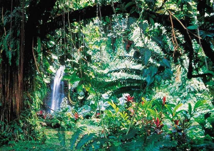 I giardini acquatici di Vaipahi, un piccolo paradiso terrestre avvolto da affascinanti leggende situati a Mataiea, sempre sull'isola di Tahiti (PH H. Leue)