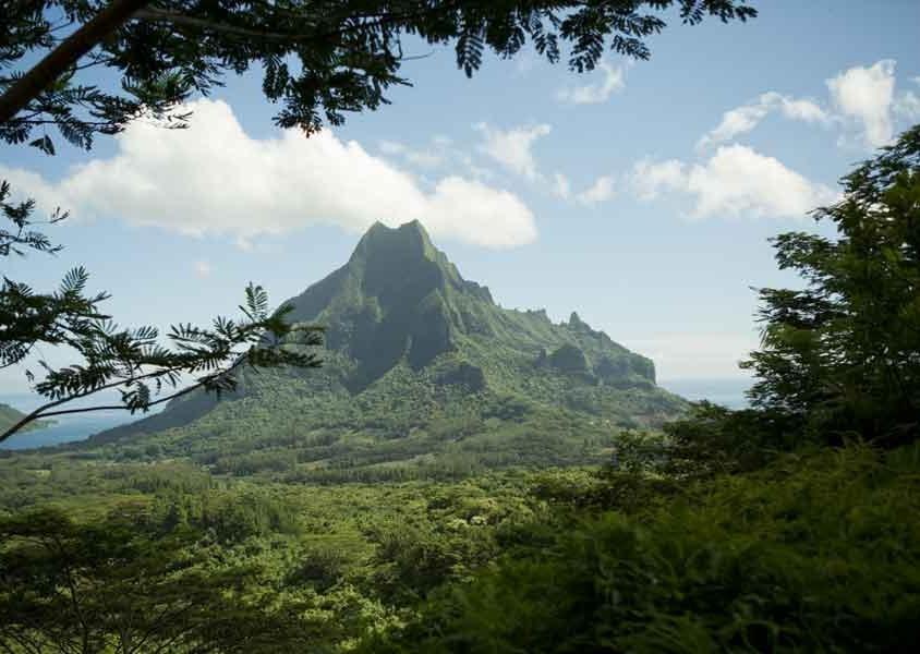 A Moorea si trova uno splendido giardino botanico affacciato sulla baia di Opunohu e ospita moltissime specie di alberi da frutto, di fiori e una piantagione di vaniglia (PH Tahiti Tourisme)
