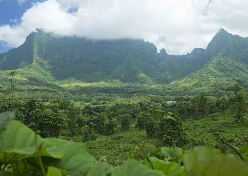 La natura selvaggia di Raiatea, conosciuta come la culla degli dei e distante da Tahiti solo 45 minuti di volo (PH Tahiti Tourisme)