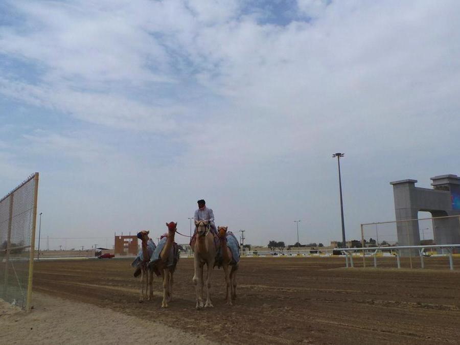 Pista per le gare di cammelli