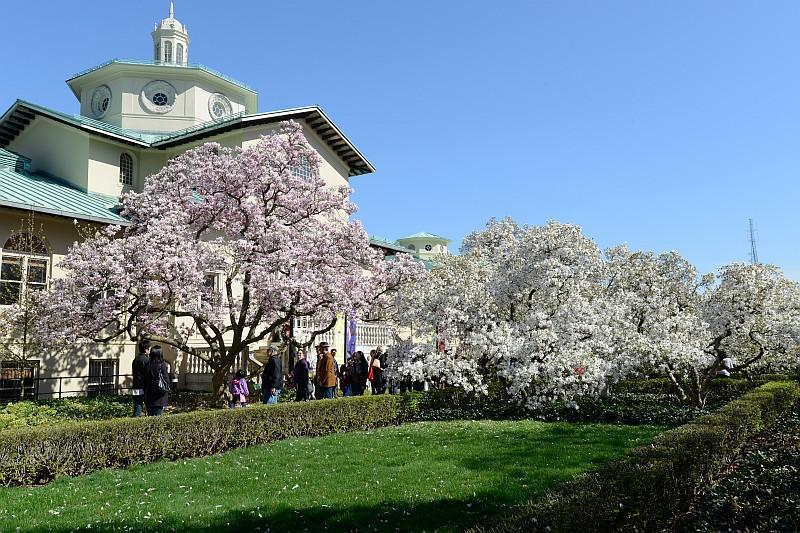 Brooklyn Botanic Garden ospita un giardino giapponese con decine di diversi tipi di ciliegi (© JULIENNE SCHAER 2013/ NYC  Company)