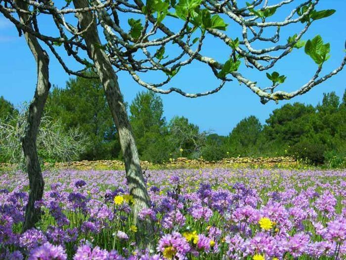 Primavera slow a Formentera