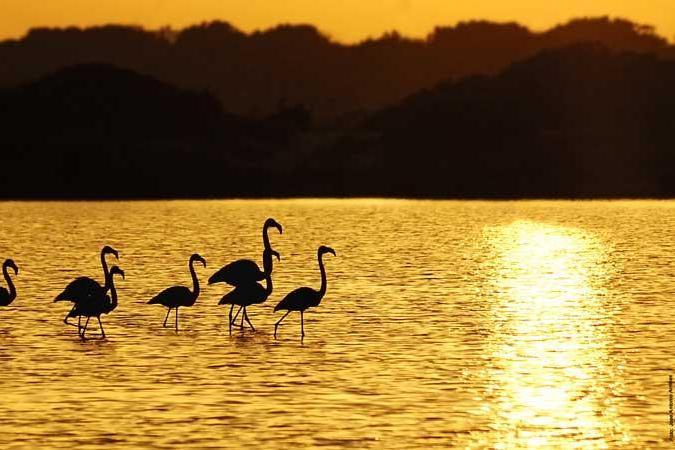 Il Parco Naturale delle Saline è l'habitat perfetto di sterne, fenicotteri e gabbiani (PH Jose A. Arribas)