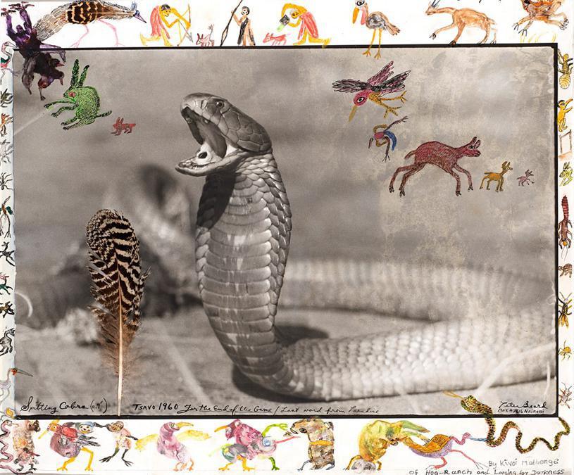 Peter Beard, Spitting cobra