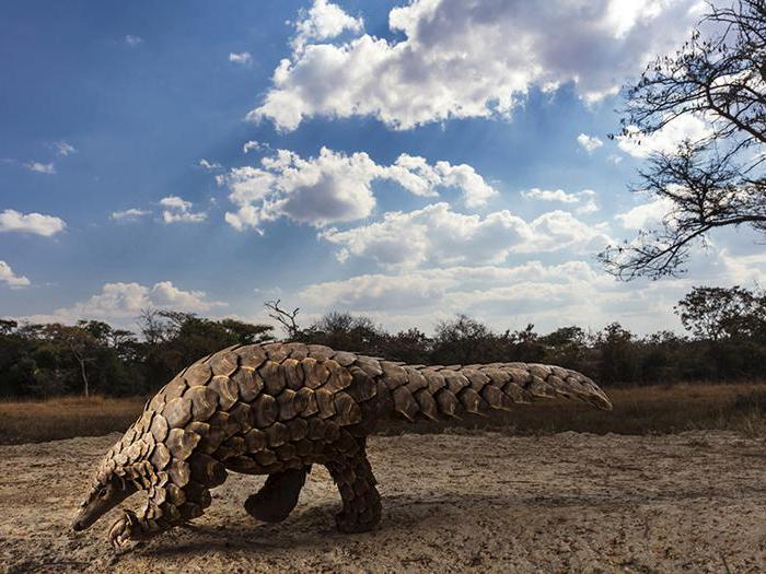 Al Sony World Photography Awards trionfano le foto dall'Amazzonia di Pablo Albarenga