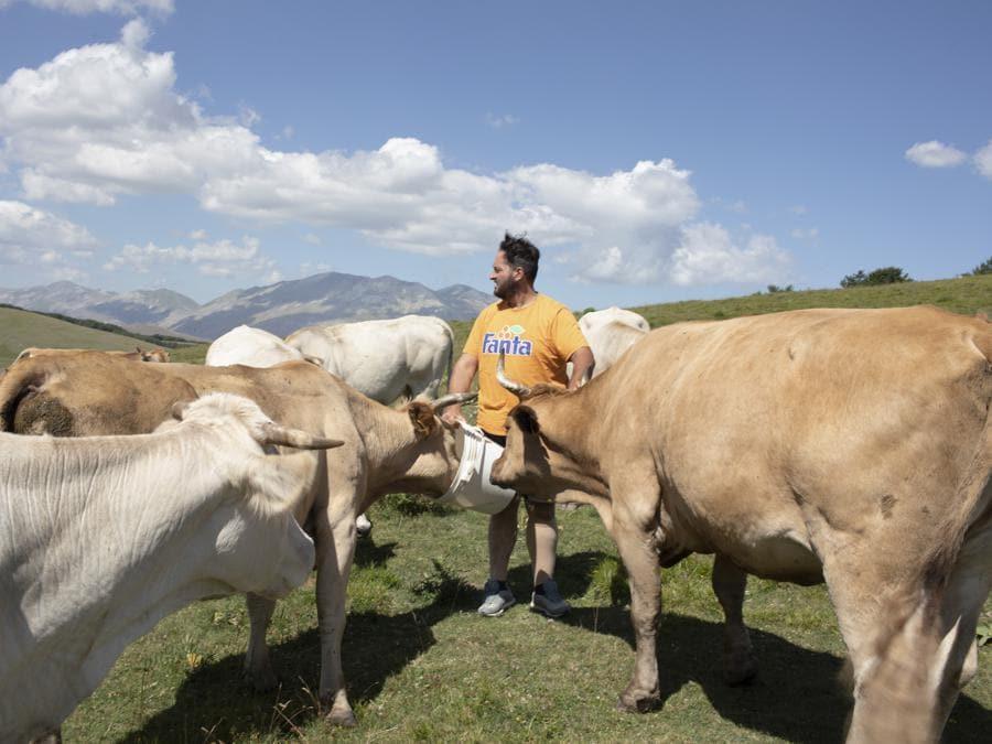 Pantano di Accumoli, luglio 2020. Giuliano Coltellese in mezzo alle sue vacche, che nei mesi estivi vivono in quota allo stato brado all'interno di questo Sito di Importanza Comunitaria (SIC) ai confini tra Marche, Lazio e Umbria (Fonte: Terraproject)