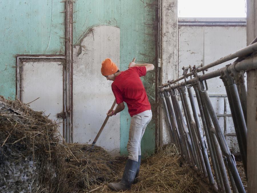Accumoli, febbraio 2021. Elisa Pica nella stalla dell'azienda agricola di famiglia Alta Montagna Bio. Prima delle lezioni, al mattino, Elisa si occupa della stalla dei bovini (Fonte: Terraproject)