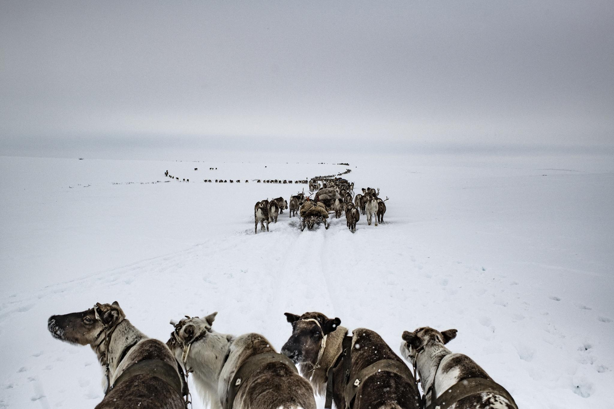 Arctic: New Frontier di Kadir Van Lohuizen e Yuri Kozyrev. Sui muri che dal piazzale Dante conducono All'Eremo di Bismantova.