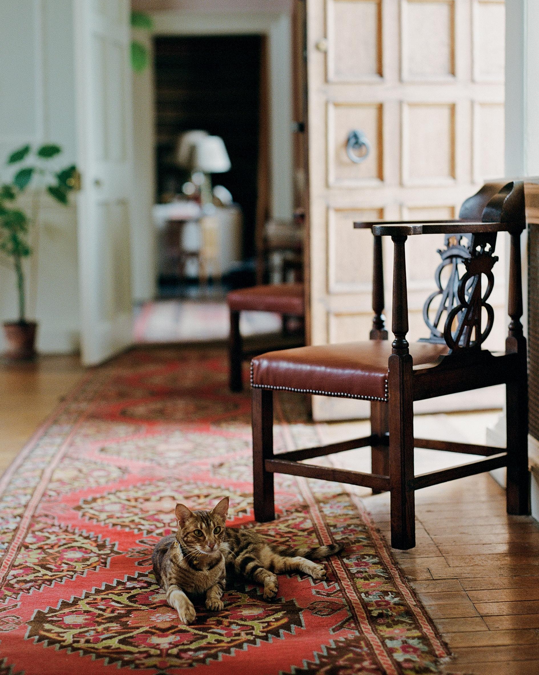 Il gatto dell'artista Tarka Kings, Lucia (dal nome della scrittrice Lucia Berlin), nel corridoio della sua casa, Airlie Castle, in Scozia.