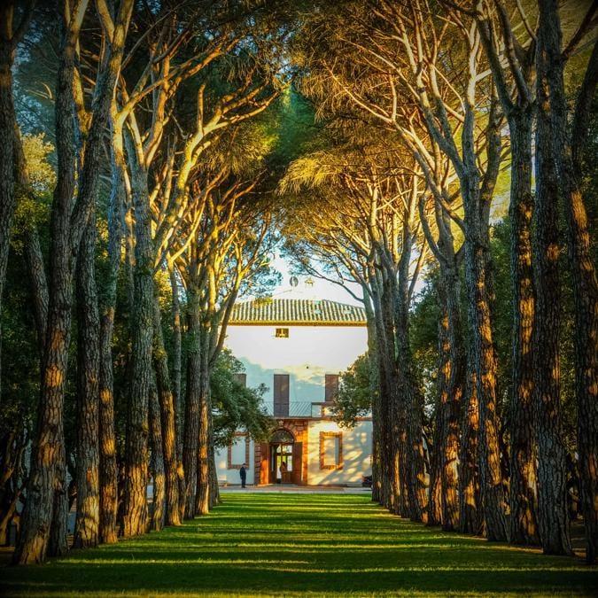 La Cattedrale dell'amore, un emozionante corridoio d'alberi
