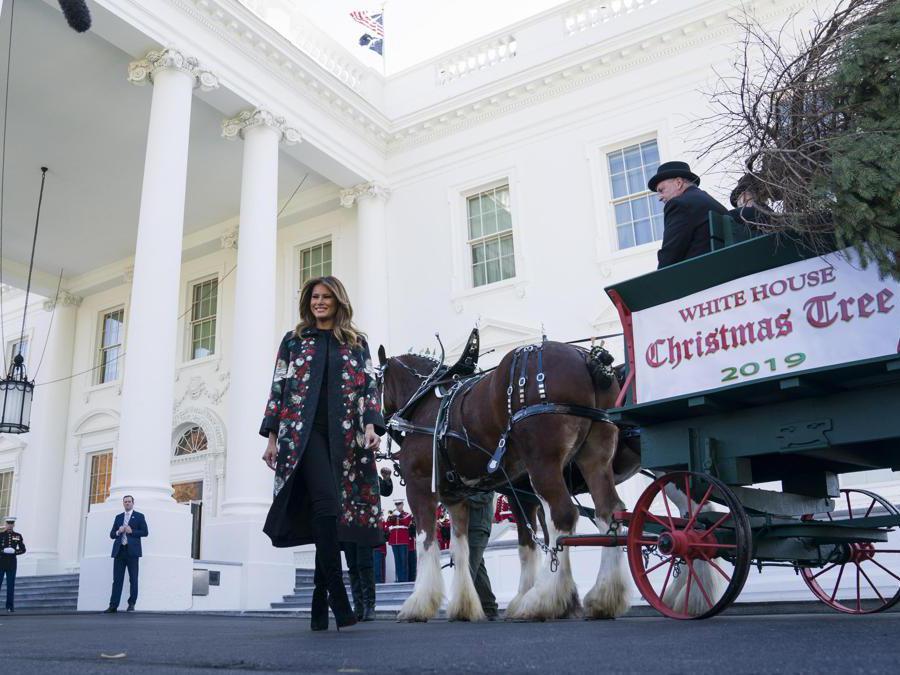 Melania Trump accoglie l'albero di Natale per la Casa Bianca, proveniente quest'anno dalle Mahantongo Valley Farms in Pennsylvania (EPA/JIM LO SCALZO)