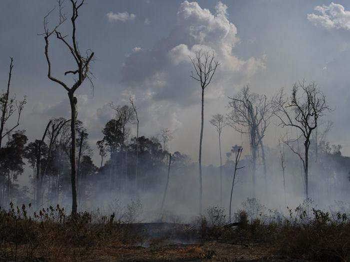 Amazzonia, il day after