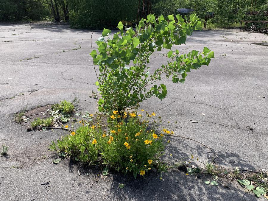 La vegetazione prende il posto dell'asfalto