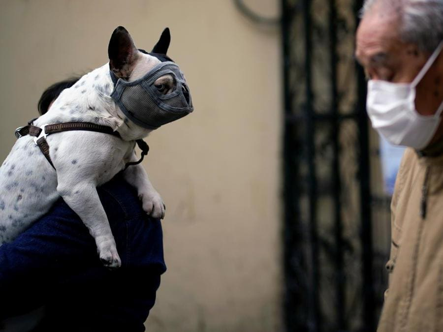 Shanghai, anche i cani indossano la mascherina (REUTERS/Aly Song)