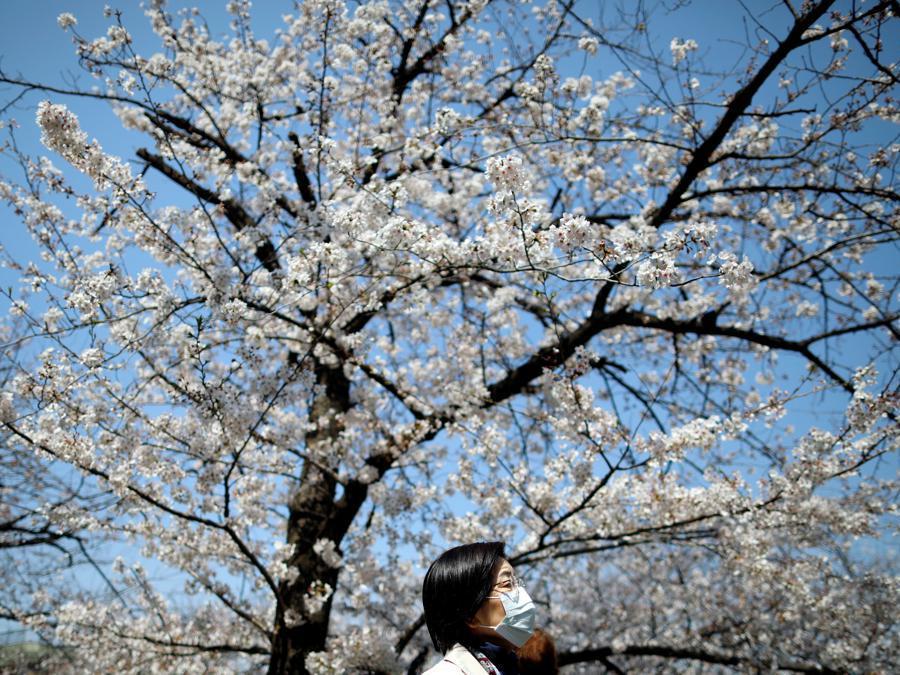 Tokyo, la fioritura dei ciliegi (REUTERS/Issei Kato)