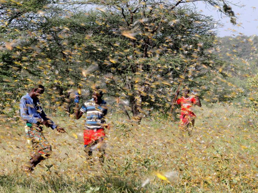 Lemasulani, Samburu County, Kenya  (Reuters)