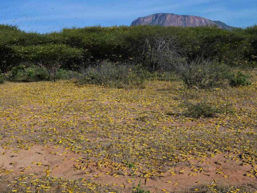 Samburu, Kenya (Afp)