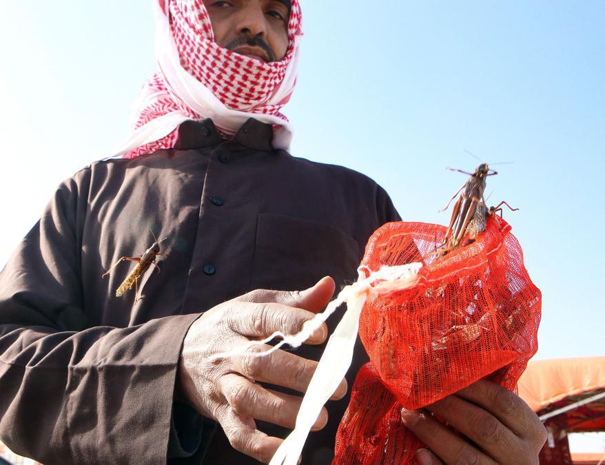 Kuwait City. Venditore di locuste (Afp)