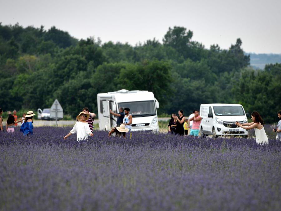 Coltivazioni di lavanda a  Puimoisson, nel sud-est della Francia   (Photo by GERARD JULIEN / AFP)