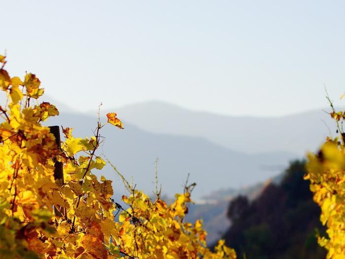 Colori e sapori dell'Alto Adige