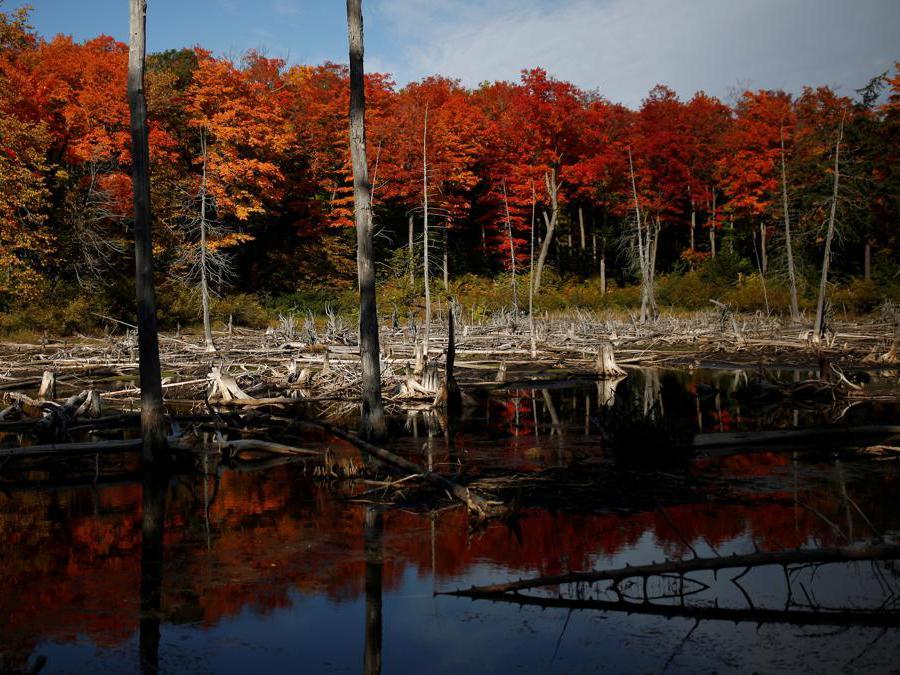 Gatineau Park, Quebec, Canada. (REUTERS/Stephane Mahe)