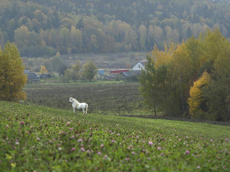 Paesaggio a Gorodechno, 150 km da Minsk (AP Photo/Sergei Grits)