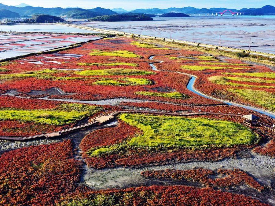 Sinan -Corea del Sud. (EPA/YONHAP SOUTH KOREA OUT)