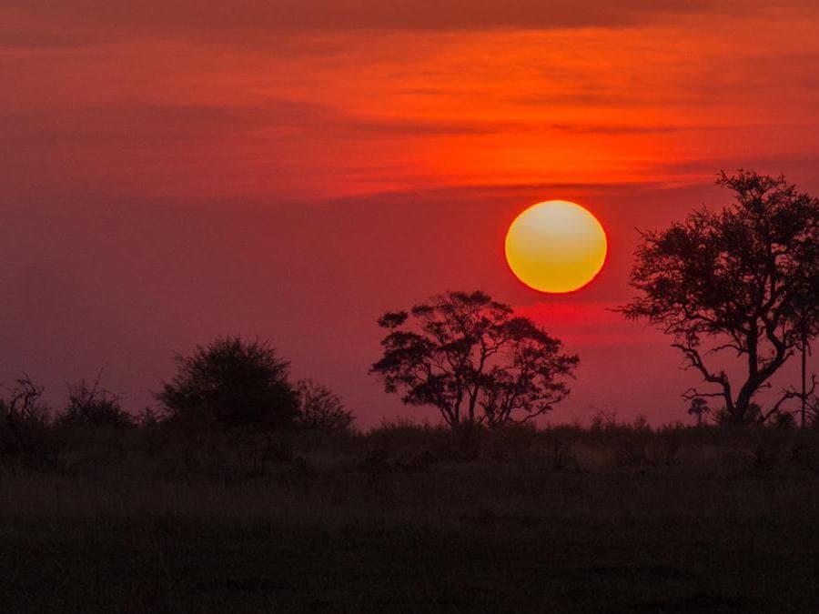 Okavango Delta, Moremi Game Reserve. (Hbieser)